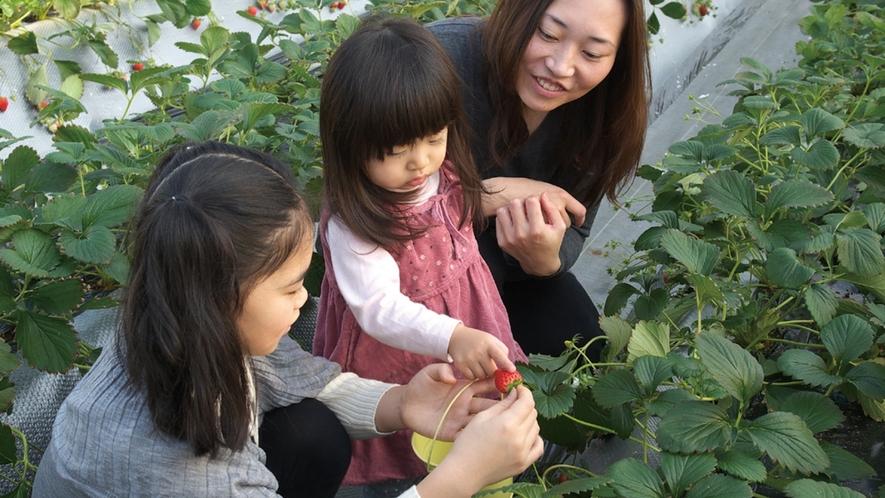 加賀フルーツランド イチゴにリンゴに!ブルーベリー!フルーツ狩りができます