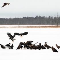 *風連湖/野鳥の行動や息遣いなど、間近で感じることが出来ます!