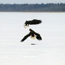 *風連湖/湖水面積57.5キロ平方メートル、周囲96kmの壮大なスケールです。