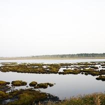 *宿周辺/約300種類もの野鳥が観測されており、自然がそのまま残されています。