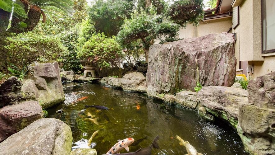 *庭園/鯉が悠々と泳いでいる風景は心が癒されます。