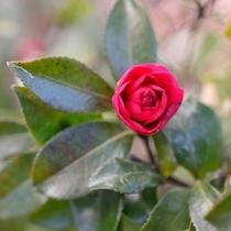 ◇色鮮やかな庭の花々