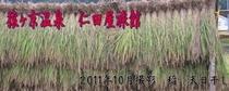 メルマガ用 2011年10月7日配信