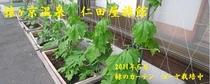 メルマガ用 2011年7月2日 TOP