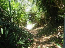 木立のトンネル 黒花