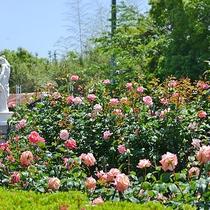 【周辺観光】九十九島動植物園 森きらら