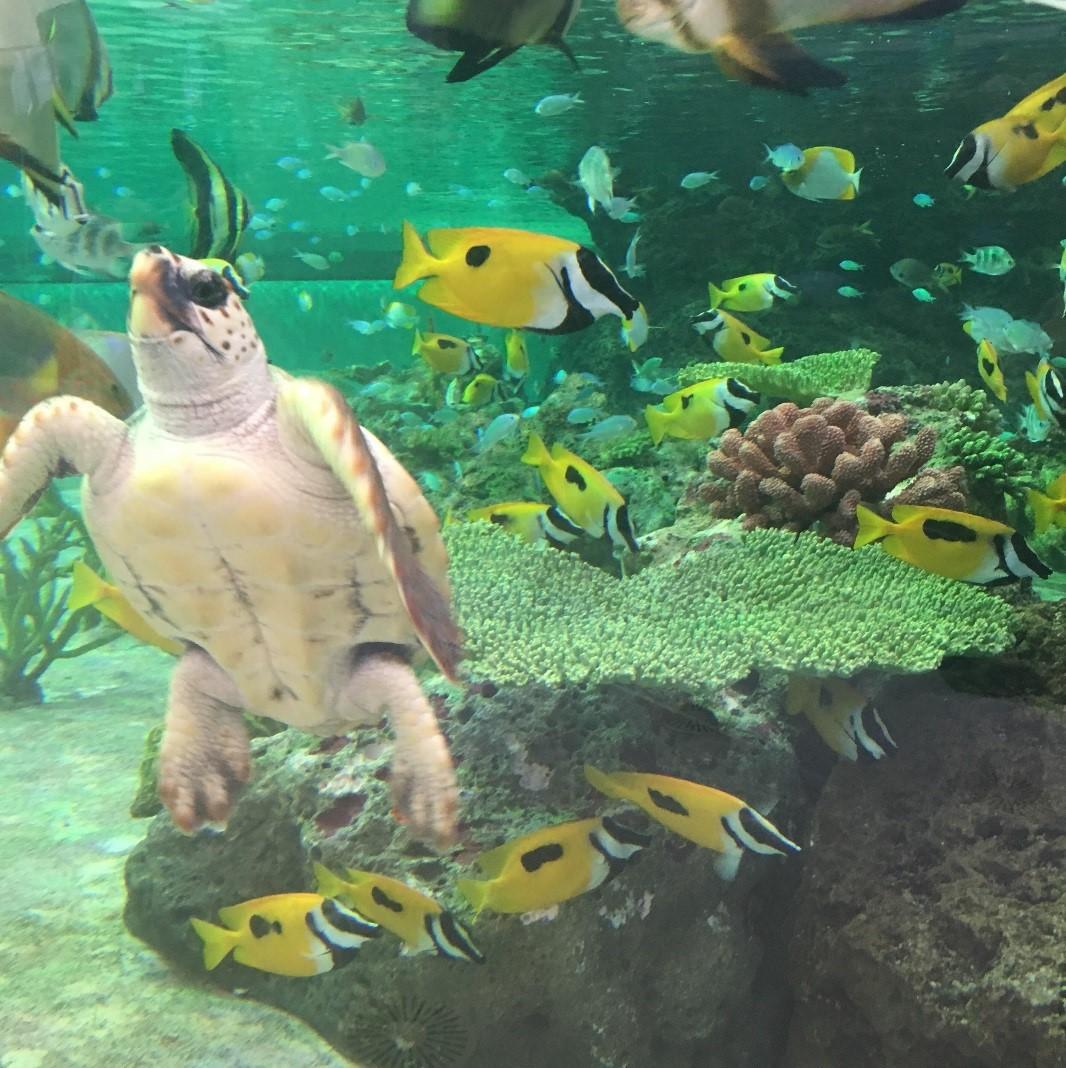 たくさんのカラフルな魚がみられます♪