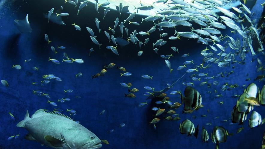 まるで海の中にいるかのようで、たくさんの魚達を見ることができますよ♪