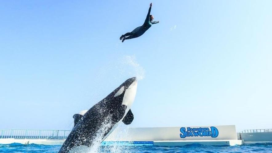 シャチパフォーマンスは日本では鴨川シーワールドだけ。