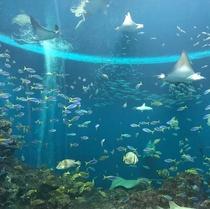 トロピカルアイランド「無限の海」