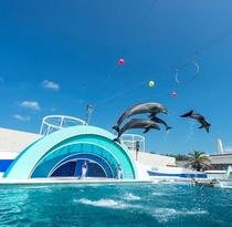 イルカの見事なジャンプ!