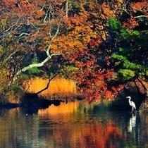 秋の伊豆一碧湖、紅葉が美しい湖畔 宿から車で約7分