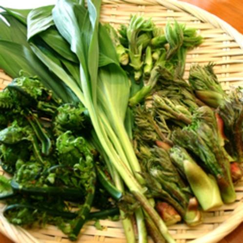 山菜のイメージ
