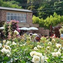 【季節の花】バラ園 霊山寺