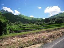 夏の田んぼと由布岳