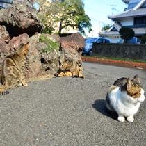 お堀の周りはネコ達の憩いの場【石田城】