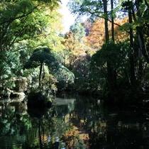 秋の庭園内の池