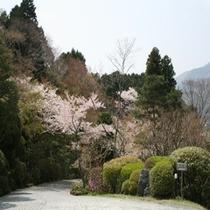 玄関からお庭を見る 春