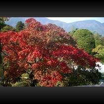■ 紅葉景色