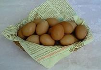 かご入り卵
