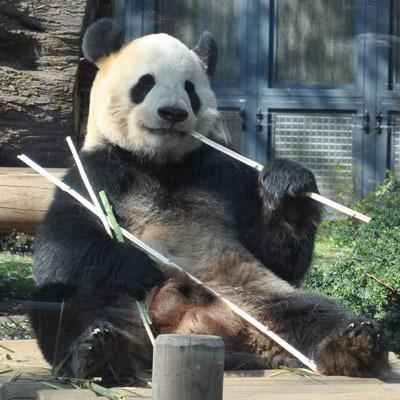 パンダ&上野動物園☆上野の顔!モニュメント・グッズ・お土産品などパンダがあふれています!