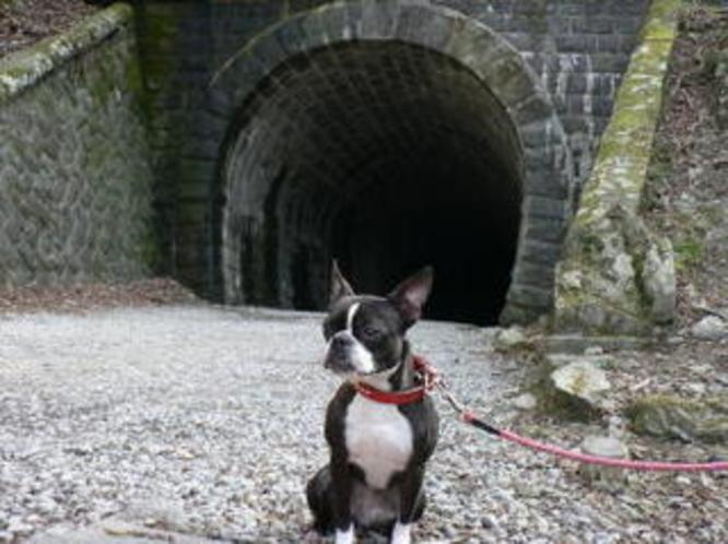 天城トンネルとかりん