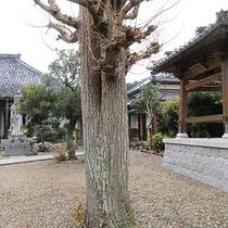 円通院の不滅の愛に結ばれた柳の木<当館から車約5分>