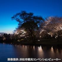 ☆フラワーパーク夜桜