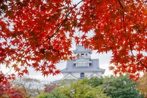 豊公園紅葉