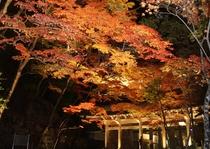 永源寺ライトアップ