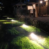 梅花藻 ライトアップ イメージ Photo:(公社)びわこビジターズビューロ