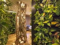 711号室/バリ島・ウブド産の『アコウ』の木がそびえ立つ。