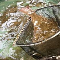 鮮度にこだわり!魚介は直前まで生け簀です