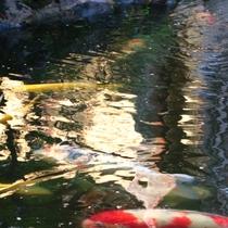 ※中庭の池が風情を演出します