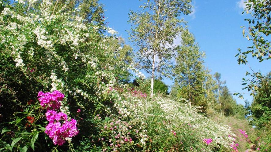 【陽殖園】9月の様子。色とりどりの花が咲いています。