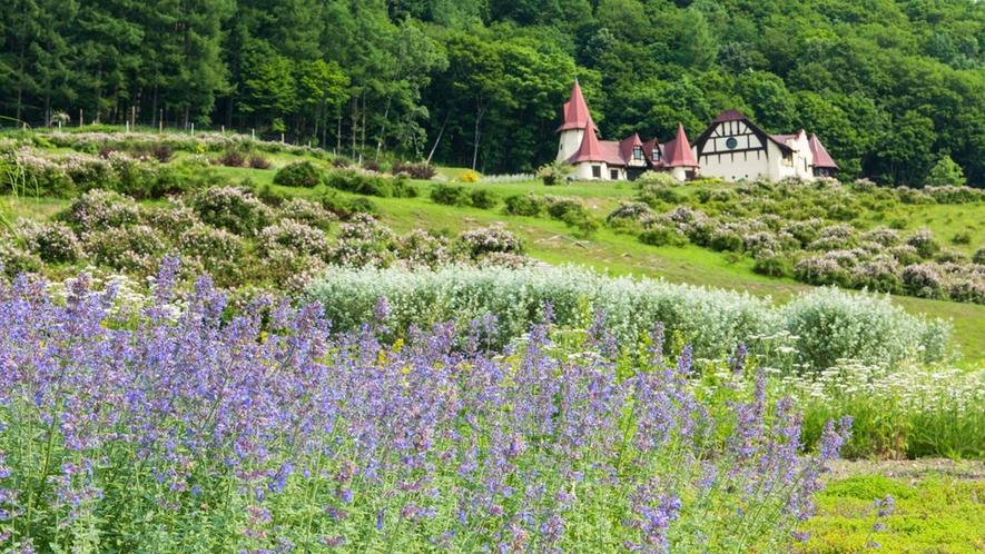 【ハーブガーデン】5月から10月にかけて様々なハーブや草花を楽しむことができます。