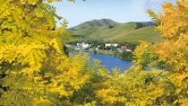 白樺湖・車山。アカシアの紅葉