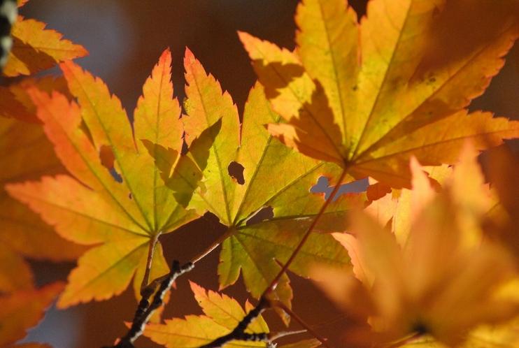 美しい葉っぱが顔を覗かせます