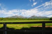 やっぱ高原といえば牧草と山!