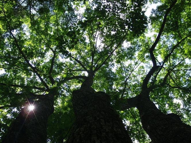 夏の木々は涼しい木陰を作ってくれます