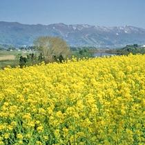*飯山菜の花と北竜湖