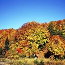 斑尾山(秋)