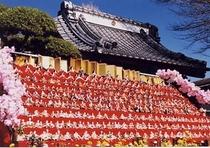 覚翁寺山門前の段飾り
