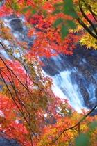養老渓谷(粟叉の滝)と紅葉