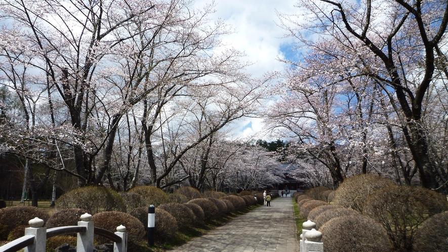 蓼科山聖光寺◆「本州で最も遅いソメイヨシノ」が見られる桜の名所