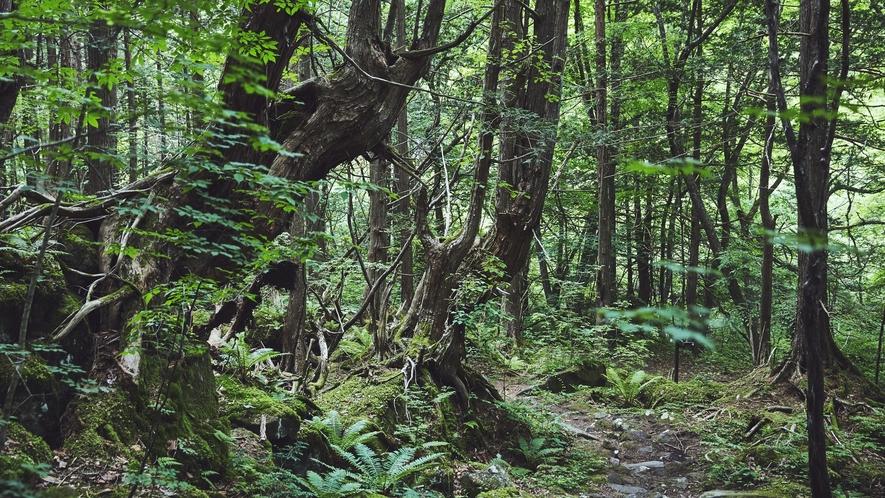 蓼科大滝遊歩道◆蓼科大滝は茅野市のビーナスライン沿いにあります