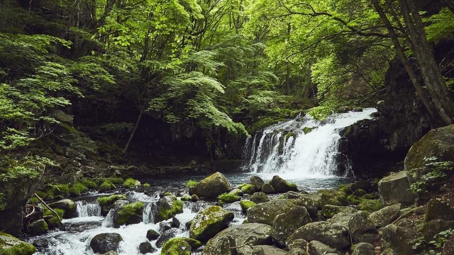 蓼科大滝遊歩道◆季節毎風景を変える渓谷と渓流、絵葉書のような美しさ