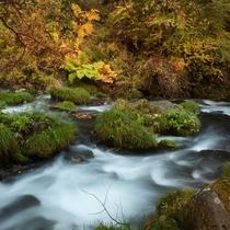 ◇秋の渓流