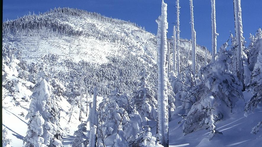 ピラタス蓼科スノーリゾート◆ロープウェイで一気に標高2,240mへ登ると、山頂に樹氷が広がります