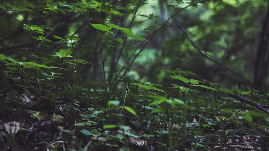 蓼科大滝遊歩道◆滝と森の撮影を同時に楽しめる撮影スポットになっています